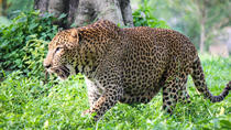 Private Day Tour To Pinnawala Open Zoo From Bentota, Bentota, Zoo Tickets & Passes
