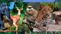 Private Day Tour To Pinnawala Open Zoo From Colombo, Colombo, Zoo Tickets & Passes