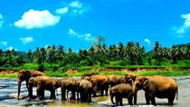 Private Kandy Day Tour with Pinnawala From kalutara, Kalutara, Cultural Tours