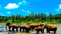 Private Kandy Day Tour with Pinnawala From kalutara With Lunch, Kalutara, Cultural Tours