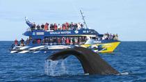 Whale watching in Mirissa from Beruwela & Bentota, Bentota, 4WD, ATV & Off-Road Tours