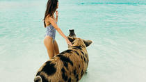 Exuma Cays Swimming Pigs and More Half Day Tour - Fly In From Nassau, Bahamas, Nassau, Cultural ...