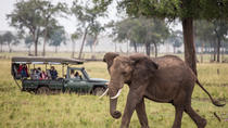 The Great Migration and Giant Prawns - Masai Mara, Kenya and Zanzibar, Nairobi, Multi-day Tours