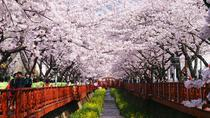 1-Day Visit to the Jinhae Gunhangje Cherry Blossom Festival from Seoul, Seoul, Day Trips