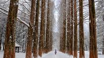 Full-Day Nami Island and Daemyung Vivaldi Ski Resort Independent Tour from Seoul, Seoul, Day Trips