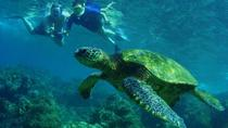 Grand Circle Island Snorkel Tour, Oahu, Snorkeling
