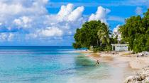 Barbados Island and Beach Tour, Barbados, Snorkeling
