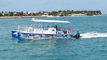 Key West haaien- en wilde-dierentour per catamaran, Key West, Catamarancruises