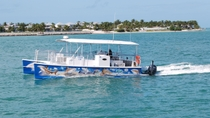 Key West Shark und Tierwelt Katamaranfahrt, Key West, Catamaran Cruises