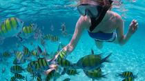Freeport Snorkeling and Catamaran Cruise to Peterson Cay National Park, Freeport, Catamaran Cruises