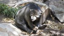 Adelaide Zoo Behind the Scenes Experience: Bear at Breakfast, Adelaide, Zoo Tickets & Passes