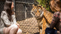 Adelaide Zoo Behind the Scenes Experience: Big Cat Interaction, Adelaide, Zoo Tickets & Passes