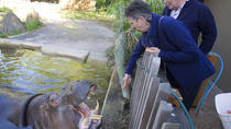 Adelaide Zoo Behind the Scenes Experience: Hippo Interaction, Adelaide, Zoo Tickets & Passes