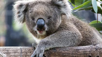 Adelaide Zoo Behind the Scenes Experience: Koala Encounter, Adelaide, Zoo Tickets & Passes