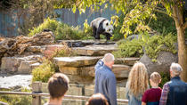 Adelaide Zoo Behind the Scenes Experience: Panda and Friends Tour, Adelaide, Zoo Tickets & Passes