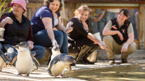 Adelaide Zoo Behind the Scenes Experience: Penguins in Person, Adelaide, Zoo Tickets & Passes