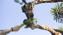 Adelaide Zoo General Admission with Giraffe Feeding Experience, Adelaide, Zoo Tickets & Passes