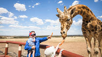 Giraffe Safari and a day at Monarto Zoo, Adelaide, Zoo Tickets & Passes