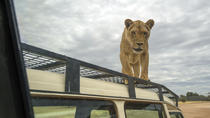 Lions 360 Experience and a Day at Monarto Zoo, Adelaide, Zoo Tickets & Passes