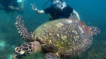 2-dive trip to Koh Tao, Koh Samui, Scuba Diving
