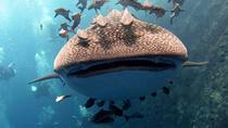 2-dive Trip to Sail Rock, Koh Samui, Scuba Diving