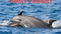 Dolphin Odyssey and Sightseeing Tour, Jacksonville, Day Cruises
