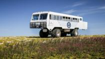Tundra Buggy Summer Day Tours, Manitoba, 4WD, ATV & Off-Road Tours