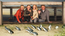 Phillip Island Nature Park Full-Day Tour from Melbourne, Melbourne, Full-day Tours