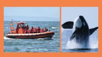 Open Boat Nanaimo Whale Watching, Nanaimo, Cultural Tours