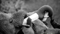 In the footsteps of Elephants - Nairobi, Ithumba, Umani Springs and Amboseli, Nairobi, Private ...