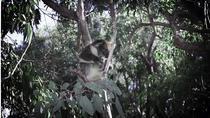 Caversham Wildlife Park and Stargazing tour, Perth, Nature & Wildlife