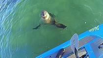 Seal and Penguin Island Wildlife Kayak Tour, Perth, Kayaking & Canoeing