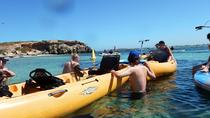 Seal and Penguin Island Wildlife Kayak Tour