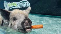 Famous Swimming Pigs Tour Bahamas - Full Day Powerboat to Exuma from Nassau, Nassau, Cultural Tours