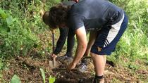Be a Sustainable Farmer for a day, Monteverde