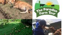 Visit a sustainable farm, Monteverde, Cultural Tours