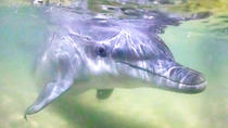 Premium Dolphin Feeding Day Cruise to Tangalooma Island Resort on Moreton Island, Brisbane, Day ...