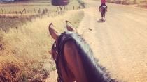 2 Hour Vineyard Trailride, Stellenbosch, Wine Tasting & Winery Tours
