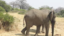 10 Days of Southern Tanzania Highlights, Dar es Salaam, Multi-day Tours