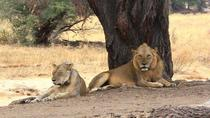 3 DAYS BEST OF SELOUS GAME RESERVE ROAD TRIP, Dar es Salaam, Multi-day Tours