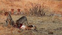 6 DAYS 5 NIGHTS RUAHA AND MIKUMI NATIONAL PARK BUDGET SAFARI, Dar es Salaam, Attraction Tickets