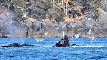 Amazing Whale Watching and Marine Wildlife Shore Excursion, Sitka, Ports of Call Tours