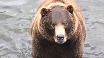 Bears, Brewery, & Totems Historical Tour, Sitka, Beer & Brewery Tours