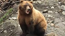 Bears, History, and Beer, Sitka, Historical & Heritage Tours