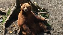 Fortress of the Bear, Brew and Totem Tour, Sitka, Cultural Tours