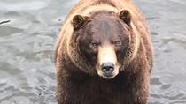 Sitka's Best : Bears, Tasters and Totems Tour, Sitka, Skip-the-Line Tours