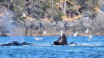 Whale Watching and Marine Wildlife Tour, Sitka, Cultural Tours