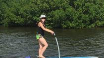 Dolphin and Manatee Tours on Stand Up Pedalboards, St Petersburg, Other Water Sports