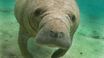 Manatee Sightseeing Eco-Tourism Tour Adventure, Naples, 4WD, ATV & Off-Road Tours