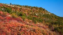 The Karst Plateau and the Great War in Friuli Venezia Giulia Wine Tour, Trieste, Wine Tasting &...